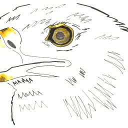 eagle drawing ink